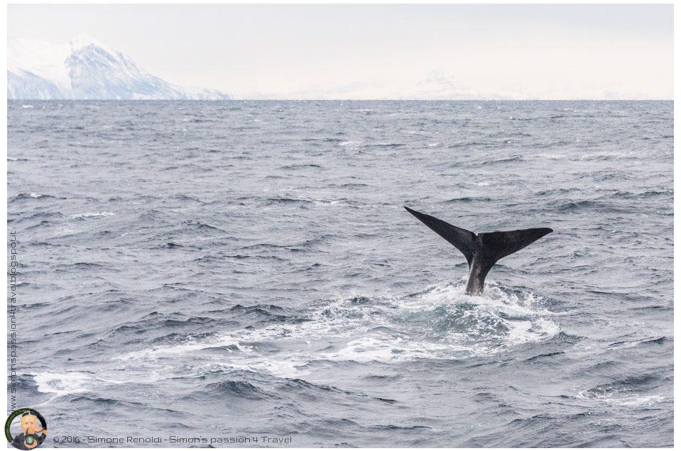 Whale safari, a caccia di capodogli!