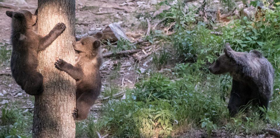 Slovenia, orsi, natura e un faunista!