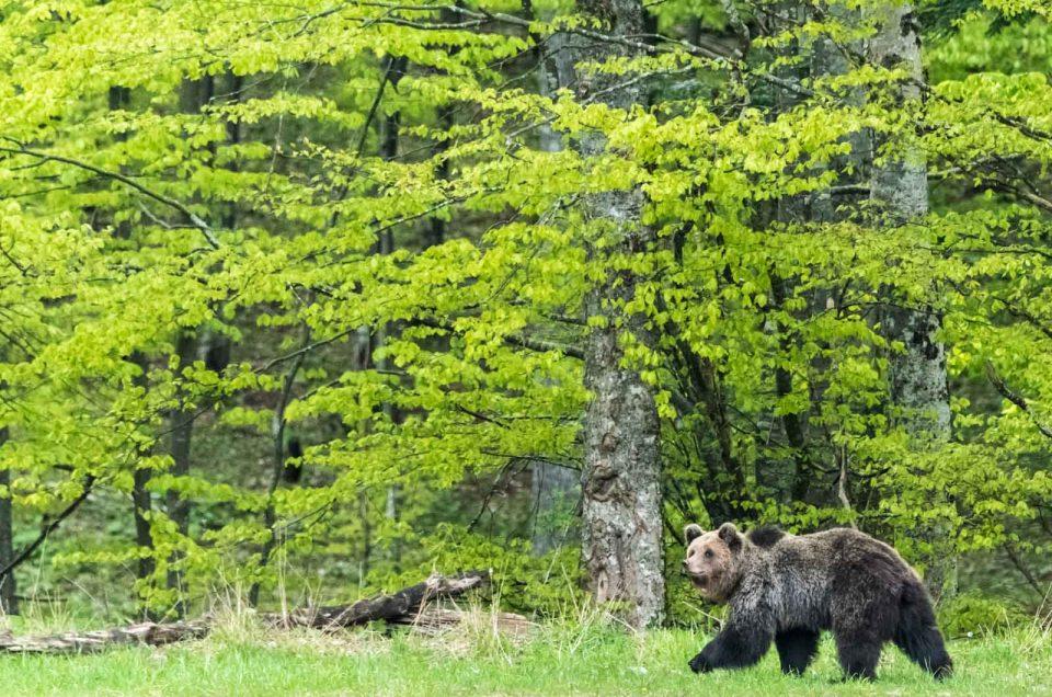 Vi racconto una foto: mamma mia, ma quello è un orso!